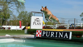 Diving Dog Practice Sessions