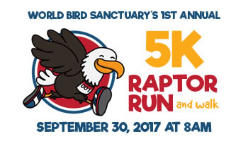 5K Raptor Run and Walk