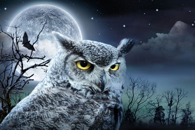 OWLoween at World Bird Sanctuary celebrates Halloween with owls, vultures and more