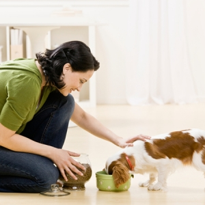 Keep your dog's belly full with nutritious food